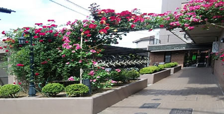 福山市の賃貸マンション メゾン八杉のバラの門